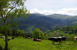 Alsace_022_4