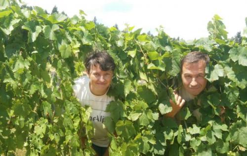 glou guide,pur jus,le goût retrouvé du vin de bordeaux