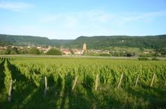 renaud bruyère,jardins de saint-vincent,arbois,les tourillons,arbois-pupillin,ploussard,trousseau,