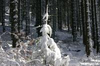 Larmont_sous_la_neige_021